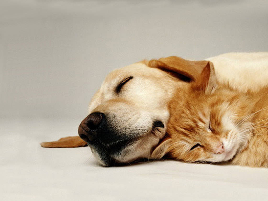 cute-cats-sleeping8