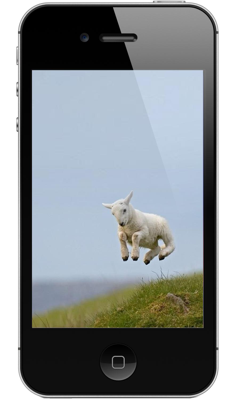 sheep_jump