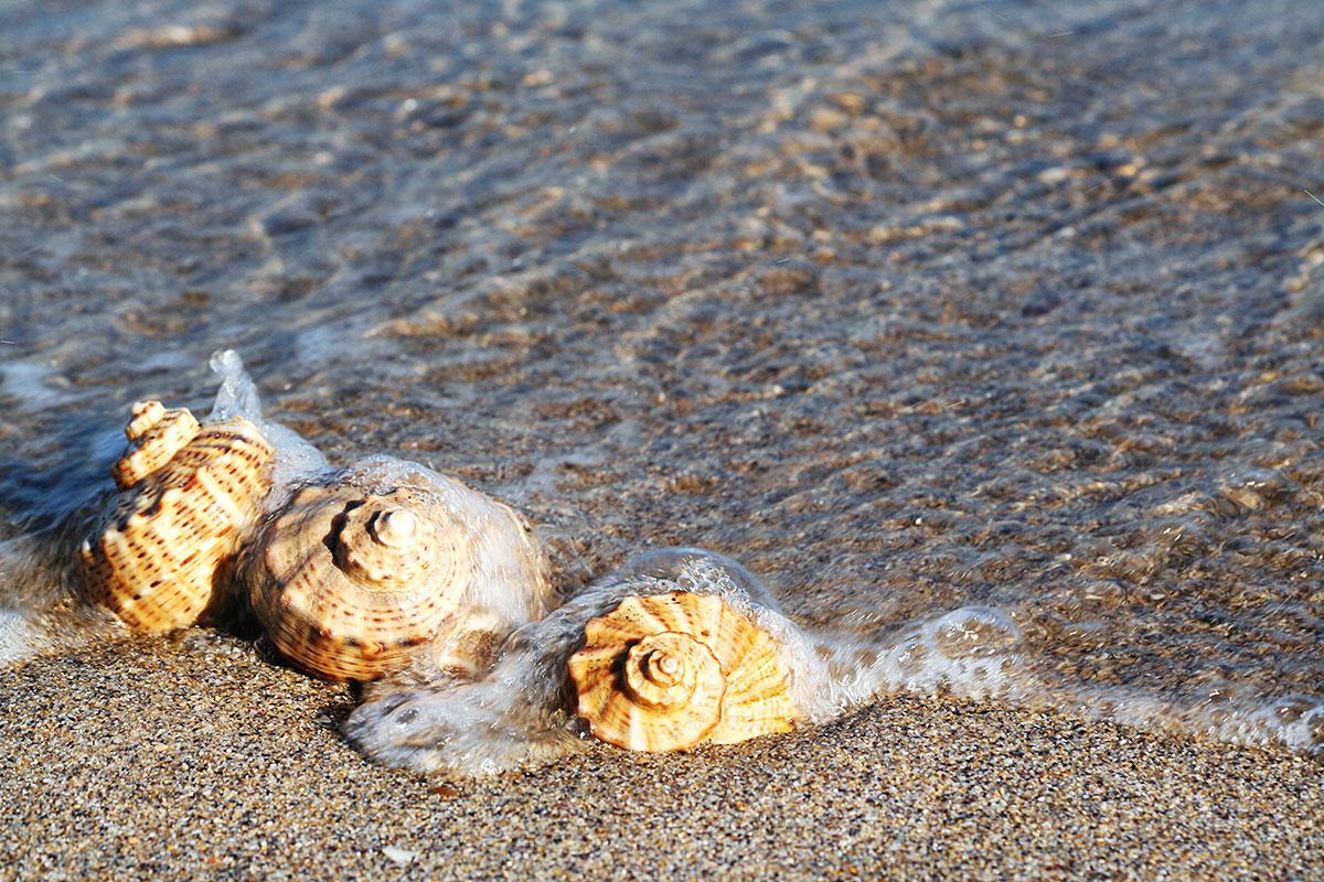 shells-sea